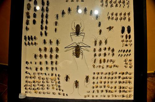 Museo de Paleontología (18)