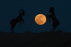 The super moon (perigee-syzygy) 2012
