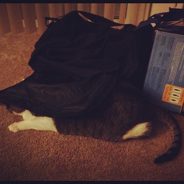 I wonder if he really thinks this is an effective hiding spot... lol