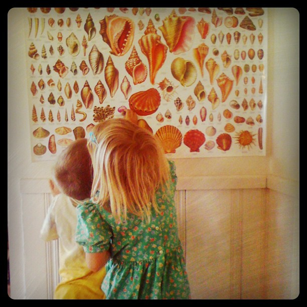 Happiness is a new poster and mama's shell collection to match up with it