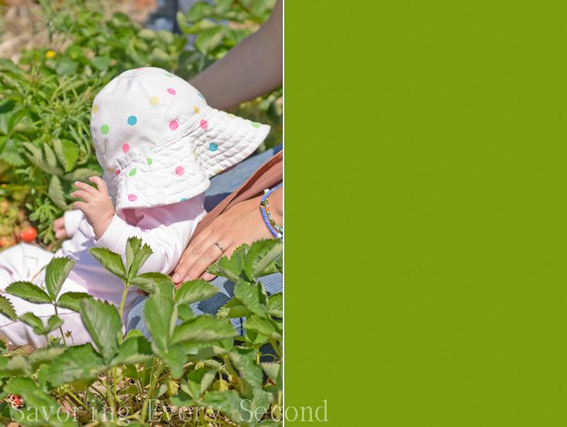 Strawberry Picking 1-035-Edit.jpg