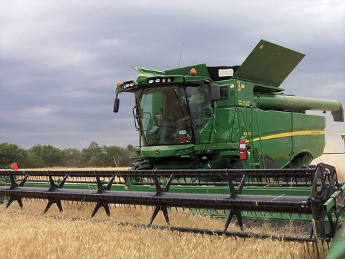 James rushes to get some wheat in his hopper before rain strikes again