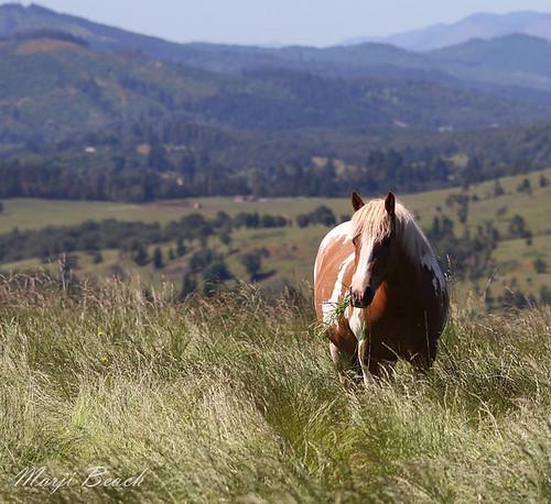 Duchess Horse Sanctuary