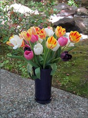 Mother's Day bouquet of tulips