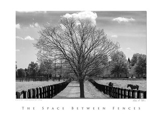 The Space Between Fences