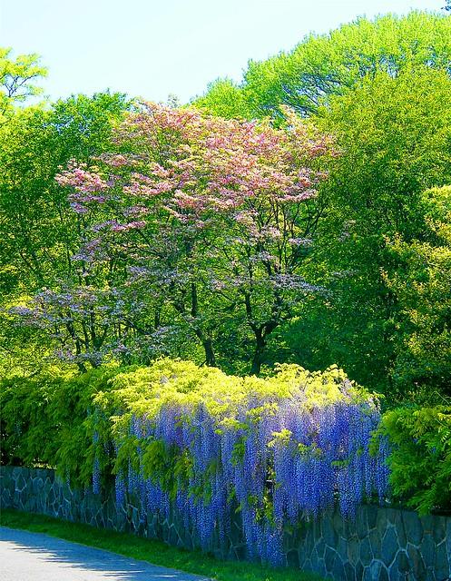 Bronx Botanical Garden Spring Flickr Photo Sharing