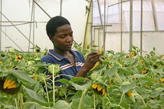 Uganda flowers