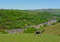 Grazing above Todmorden by Tim Green aka atoach
