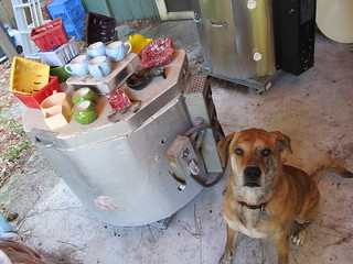 Backup Dog shows off the kilns