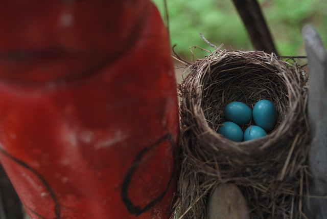 Robin's Nest, Next to Floats