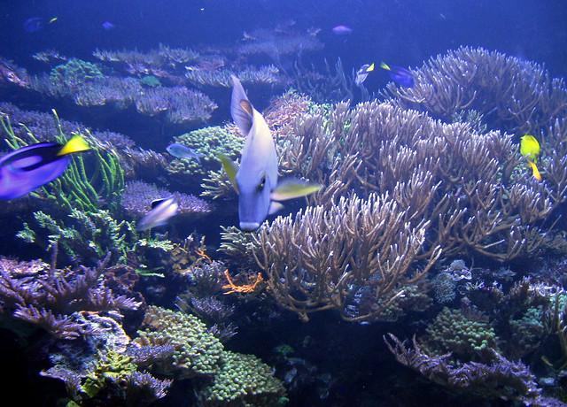 Sea World Manta Aquarium Fish Flickr Photo Sharing