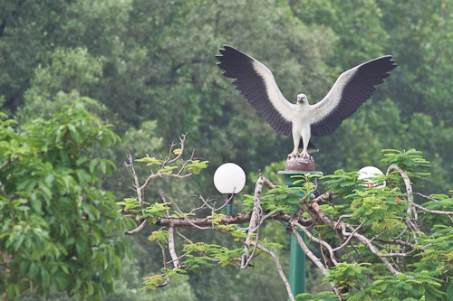 White-bellied Sea-eagle statue
