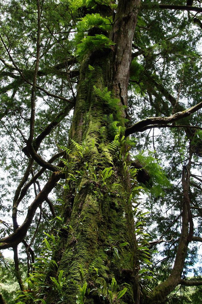 巨木群,與往拉拉山的路上-039