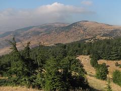 Al Shouf Cedar Nature Reserve: Pod vznešenými libanonskými cedry