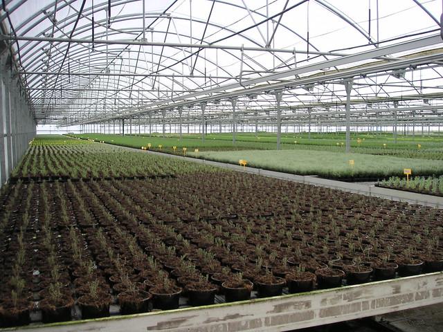 Vivero de planta forestal flickr photo sharing for Viveros de plantas