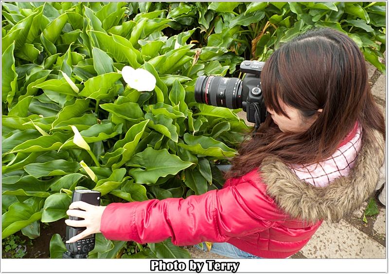 2012-04-01 京都屋與海芋  (14)