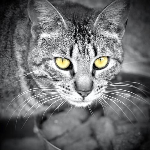 cat / gato