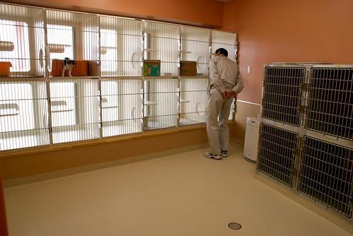 新潟県動物愛護センター