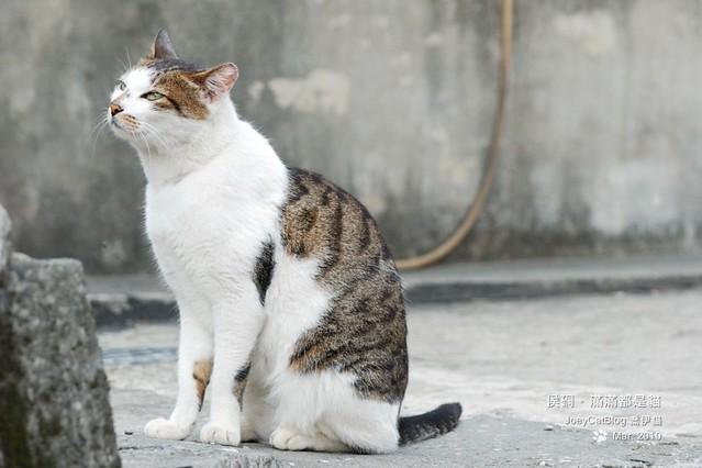 2010_0330_侯硐。滿滿都是貓DSC_0019