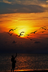 [Free Images] Animals 2, Gulls / Seagulls, Sunrise / Sunset, People - Sea / Ocean, Silhouette ID:201205121800