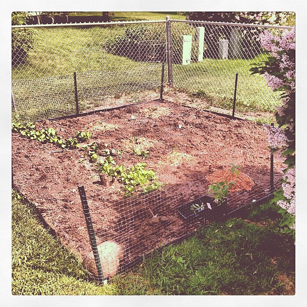 Just tilled and planted the backyard garden!