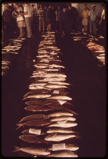 Fish auction is a daily event, November 1973