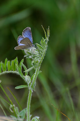 Blue Butterfly_3268.jpg by Mully410 * Images