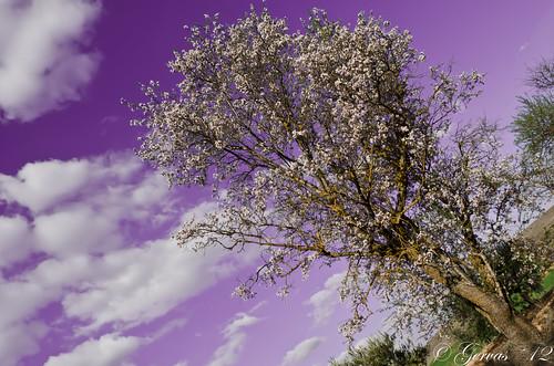 Un cielo lila