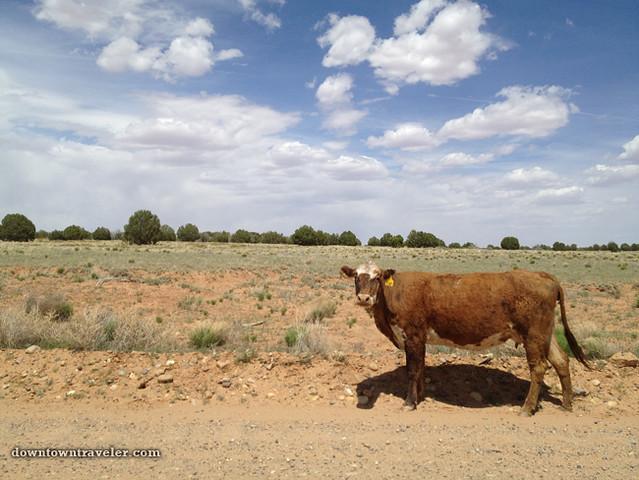 Devils Garden Escalante Monument Utah cow