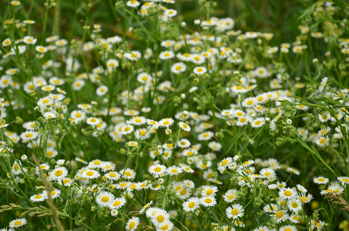 flowers flower beautiful mo missouri wildflowers lovely ozarks