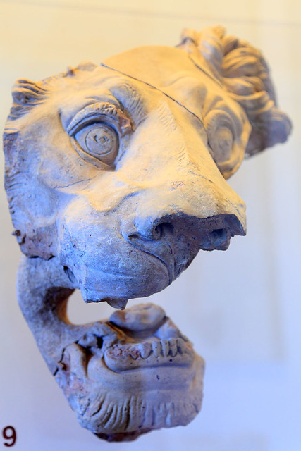Lion #9