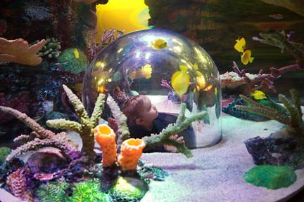 Sea Life Kansas City Aquarium Sea Life Kansas City