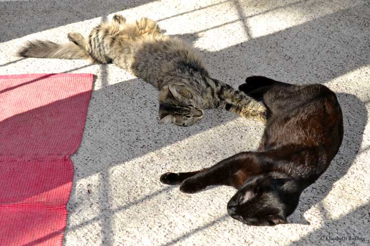 Cats napping together in the sunshine, original art toys by Elizabeth Ruffing