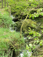 Stock Ghyll Force, Ambleside (4)