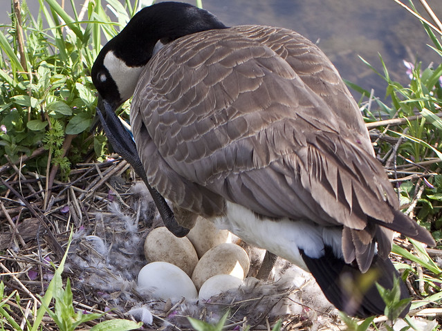 2 mama goose