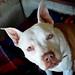 Princess for Jenny Nappa06092012_016