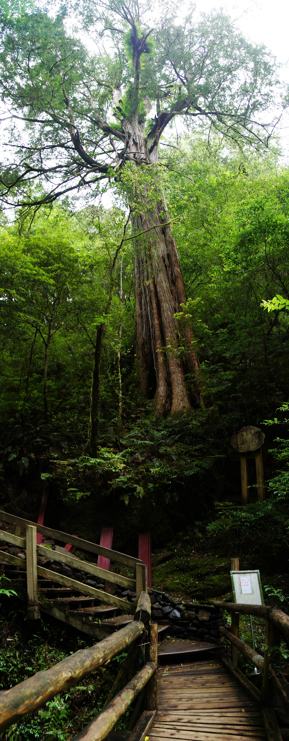 巨木群,與往拉拉山的路上-046