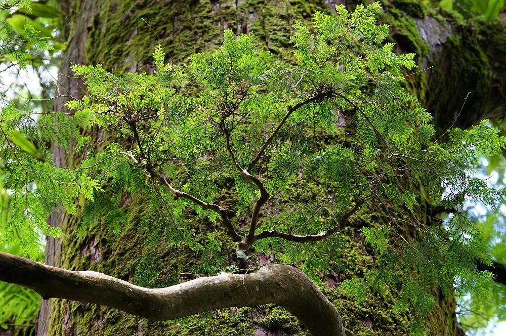 巨木群,與往拉拉山的路上-050