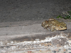 2014_03_30 21926 toad