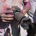 Destroyed Canon Camera at Naperville Holi Festival by JeffreyRoss