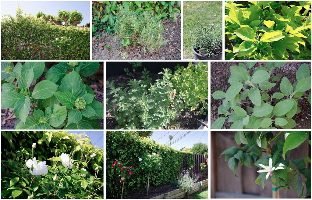 Our garden in Spring 2004