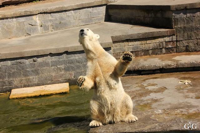 Besuch Zoo Rostock 07.05.2016103