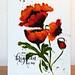 Poppy, coucher de soleil et cloche 010 by jourdainmicheline