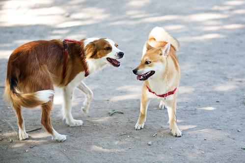 Dog Park 001