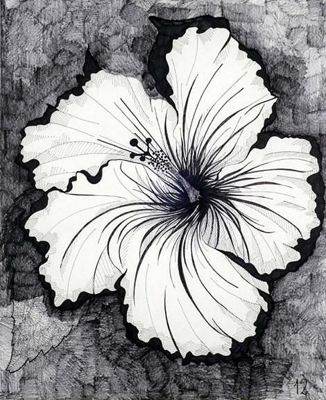 Dibujos De Flores Manuel P Banez Flickr
