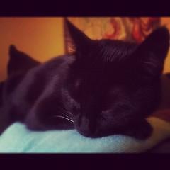 Sleepy Cado is sleepy.