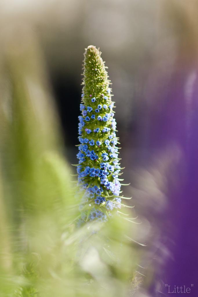 Flor ][