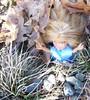Brigett for CuteKiwi1's bntm Photo 1 Fairytales Alice in wonderland Option 4 of 5 by ღ♬☂☮♫♪ Rainbowcute100™♣♦☮☼
