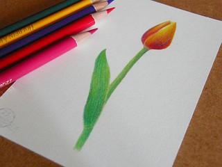 2012_04_23_tulip_01