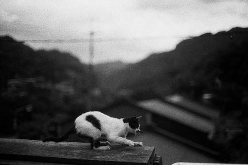 [フリー画像素材] 動物 1, 猫・ネコ, モノクロ ID:201205111000